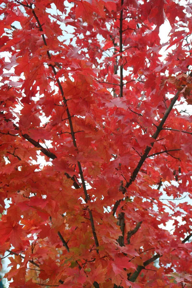 Fall Leaves 2007 101
