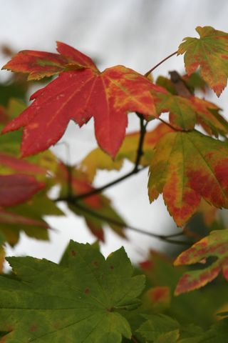 Fall Leaves 2007 055
