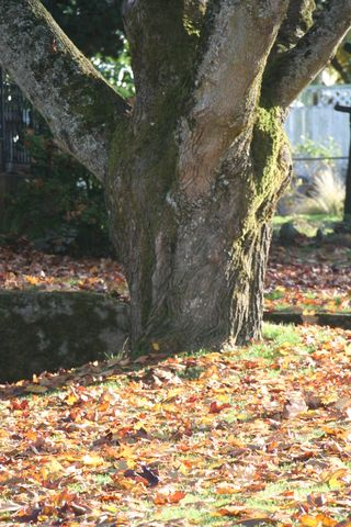 Fall leaves 2007 245